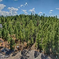 Torreon Cardinal Landing neighborhood with tall Pine Trees