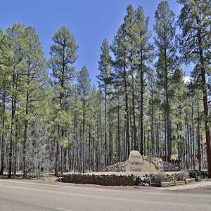 000 Buck Springs Road, Pinetop, Arizona 85935, ,Land,For Sale,Buck Springs,229016