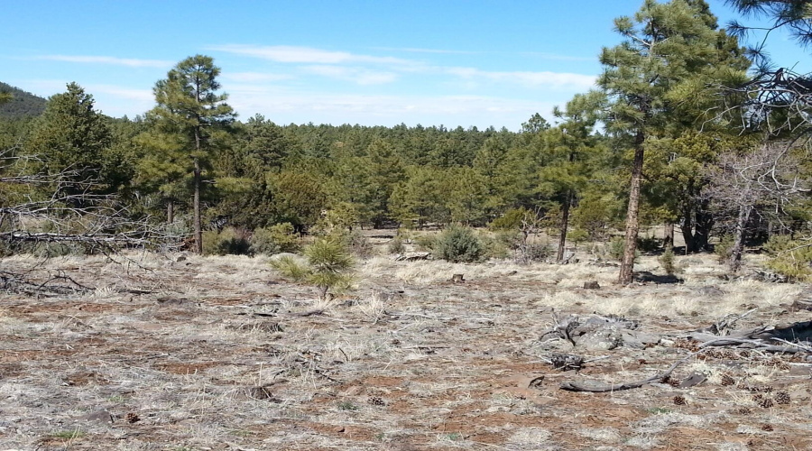 View 14 photos for 0000 Dripping Vat Spring Fire Road, Vernon, Arizona 85940 a located in Other Areas
