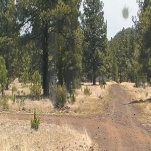 N3566 Dripping Vat Spring Fire Road, Pinetop, Arizona 85935, ,Land,For Sale,Dripping Vat Spring Fire Road,84375