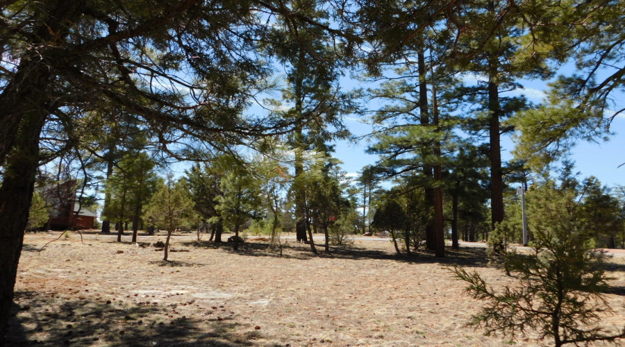 2437 San Juan Drive, Happy Jack, Arizona 86024, ,Land,For Sale,San Juan,84422