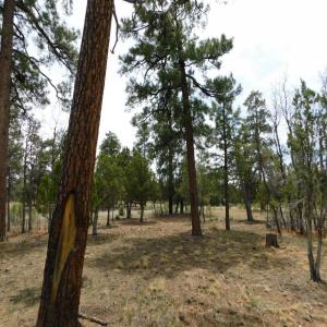 3352 Durango Drive, Happy Jack, Arizona 86024, ,Land,For Sale,Durango,84645