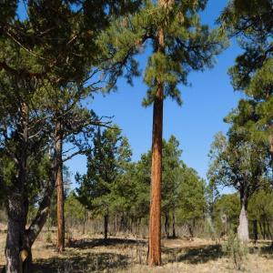 2544 Kettle Way, Happy Jack, Arizona 86024, ,Land,For Sale,Kettle,84733