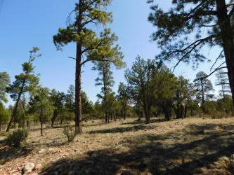 View 13 photos for 3796 Durango Drive, Happy Jack, Arizona 86024 a located in Tamarron Pines
