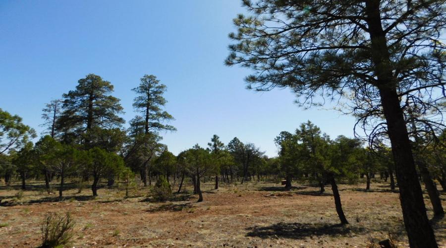 3796 Durango Drive, Happy Jack, Arizona 86024, ,Land,For Sale,Durango,84734