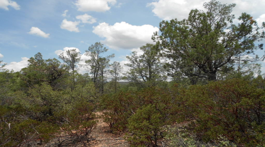 View 13 photos for 803 Desert Mimosa Circle, Payson, Arizona 85541 a located in Chaparral Pines