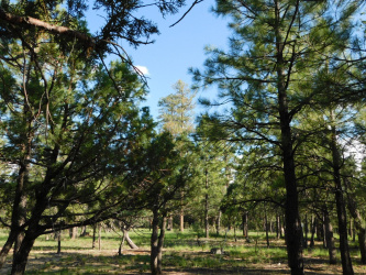View 8 photos for 1275 Sunrise Place, Happy Jack, Arizona 86024 a located in Pine Canyon Homesite