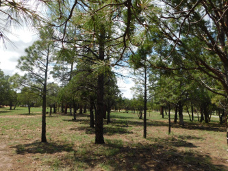 View 10 photos for 2707 Deer, Happy Jack, Arizona 86024 a located in Tamarron Pines