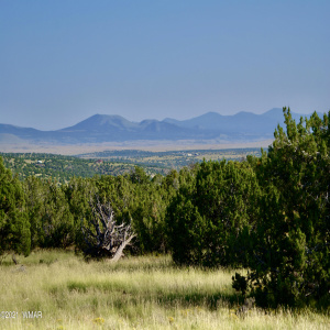 View 20 photos for 76 ACR N8504, Concho, Arizona 85924 a located in Pineridge Ranches