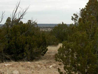 Lot 302 Chevelon Canyon Ranch, Overgaard, Arizona 85933, ,Land,For Sale,Chevelon Canyon Ranch,74807