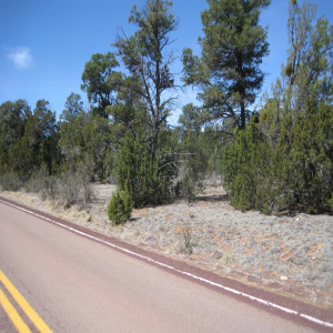 2901 Buckskin Road Road, Overgaard, Arizona 85933, ,Land,For Sale,Buckskin Road,226586
