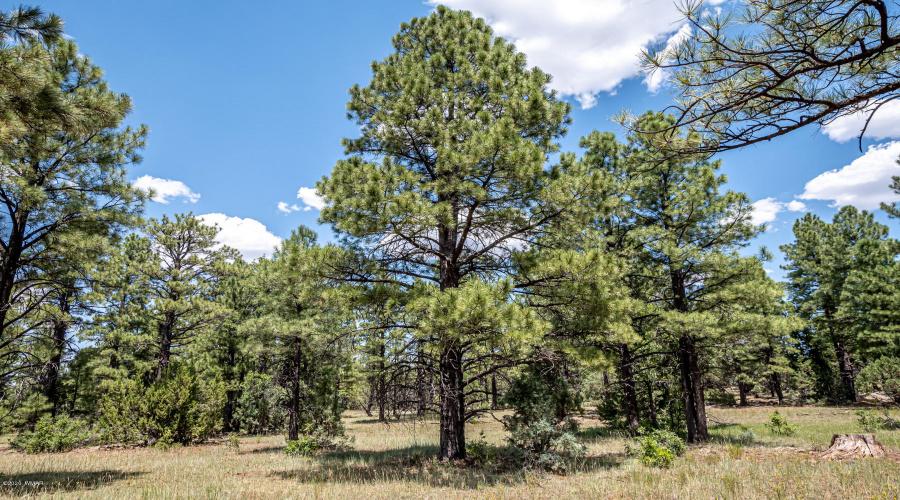 130 Lone Horseman Road, Lakeside, Arizona 85929, ,Land,For Sale,Lone Horseman,231047